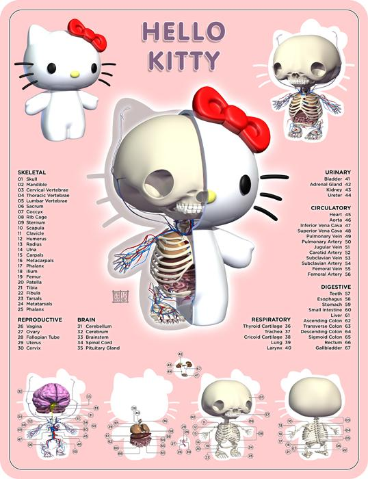 hello kitty anatomy design image