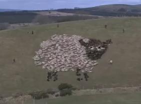 led-light-sheep
