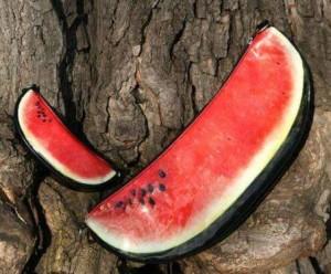 watermelon-bag-design-3