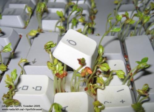 computer keyboard plant