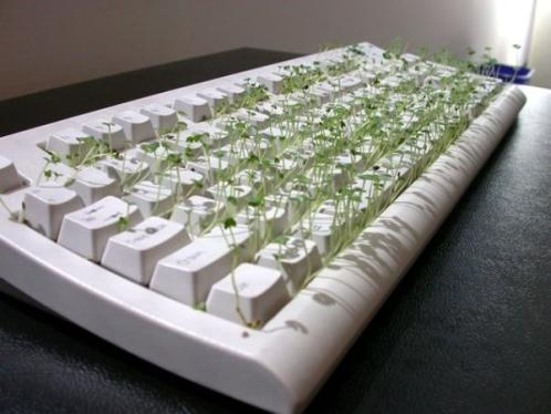 funny chia pet keyboard