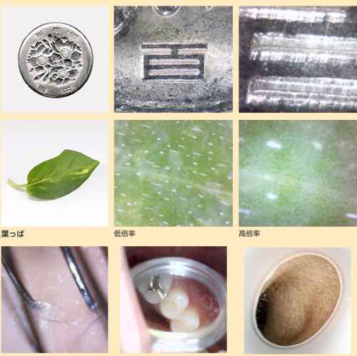 usb microscope images