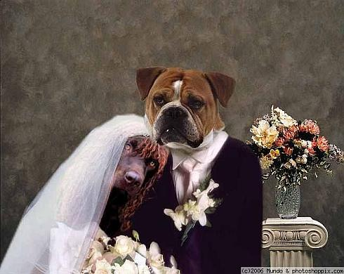 weird-wedding-6