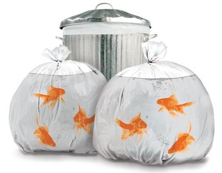 goldfish trash bags