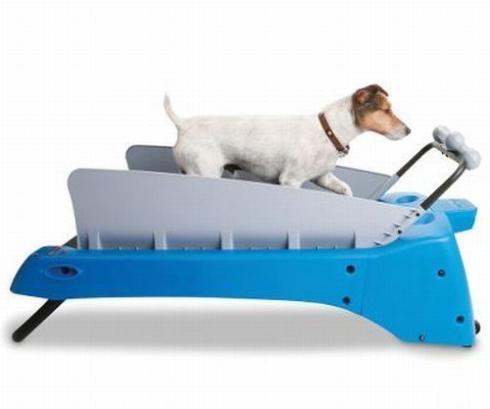pet dog treadmill