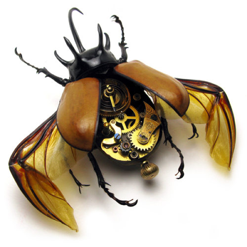 Beetle Rhino