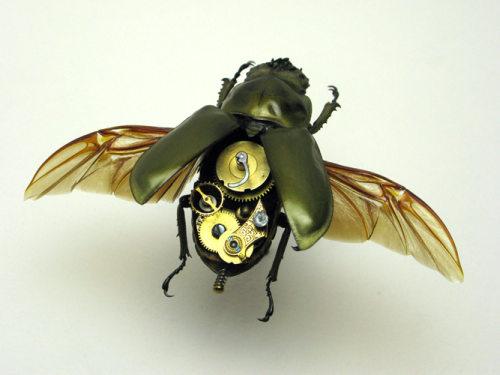 Beetle Rosenbergi