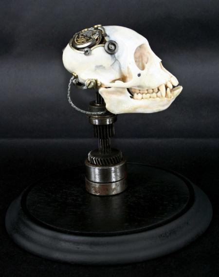 Departed - Vervet Monkey Skull