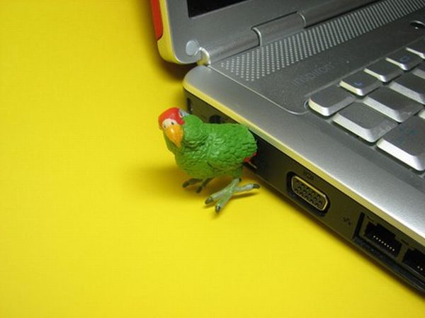 Parrot-USB-Flash Drive