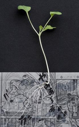 manga comics planters 2