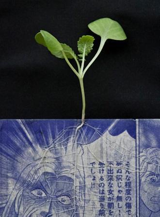 manga comics planters 5