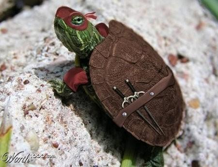 the real ninja turtle image thumb