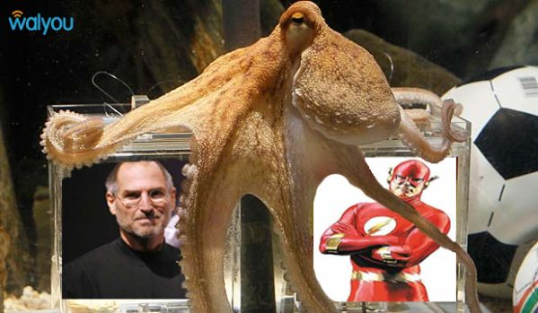 paul the octopus steve jobs vs the flash