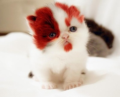 kratos god of war kitten image thumb