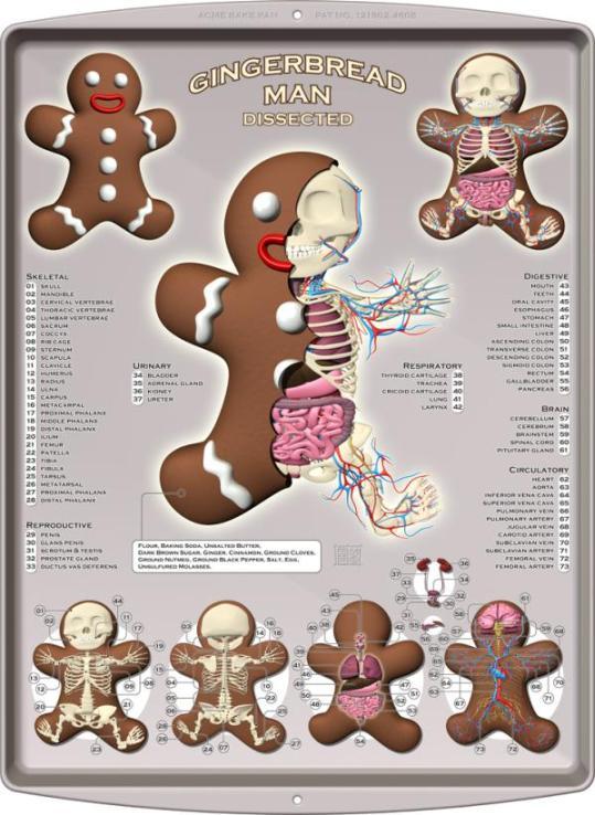 Gingerbread man anatomy design image