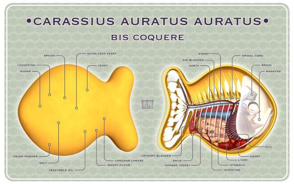 goldfish anatomy design image