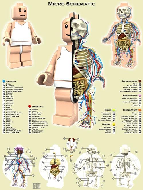 lego figurines anatomy design image